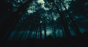 scary spooky forest