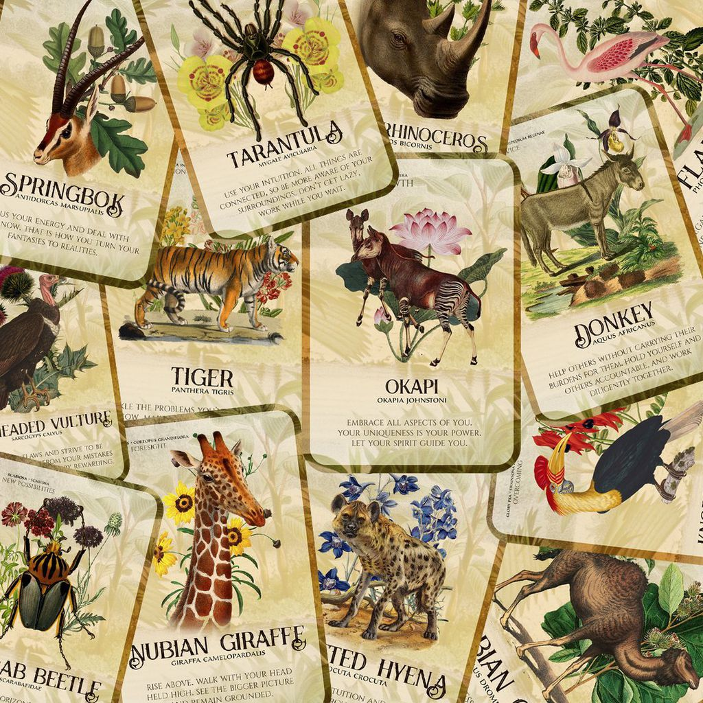 flora fauna of africa oracle deck