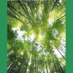 intersectional environmental books