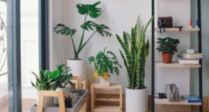 image of an assortment of houseplants near a window https://unsplash.com/photos/EleyBNnodCY