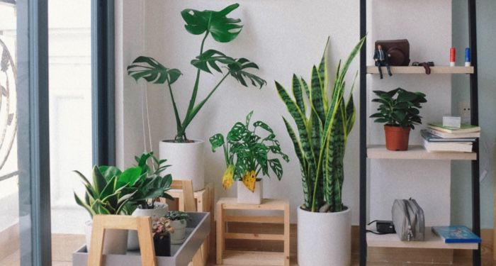 image of an assortment of houseplants near a window https://unsplash.com/photos/EleyBNnodCY