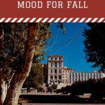 campus novels