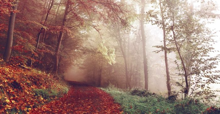 foggy fall forest scene