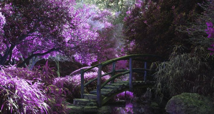 image of a wooden bridge in a mystical garden https://unsplash.com/photos/pYyOZ8q7AII