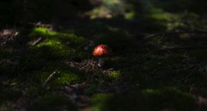image of red and white mushroom surrounded by moss https://unsplash.com/photos/nTWrdIMKZPM