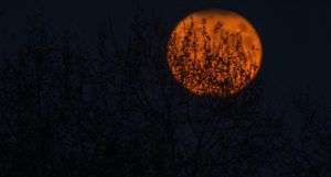 image of an orange moon peeking through tree branches at night https://unsplash.com/photos/2Ni0lCRF9bw