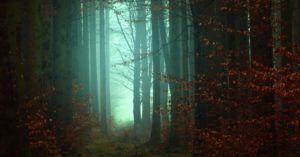 eerie autumn woods