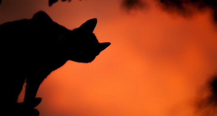 cat silhouette against orange sky