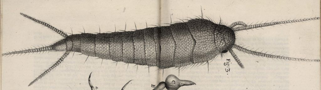 Image of a silverfish or bookworm from Robert Hooke's Microphagia