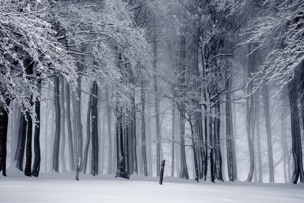 image of a snowy forest https://www.pexels.com/photo/black-and-white-cold-fog-forest-235621/