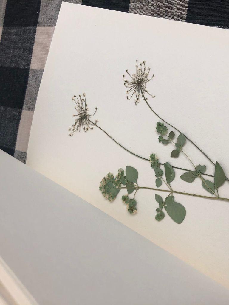 Pressed flowers inside a blank sketchbook.  [photo by me]