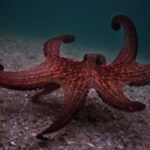 image of an octopus underwater in a still frame from MY OCTOPUS TEACHER (2020) https://www.imdb.com/title/tt12888462/mediaviewer/rm665231617/