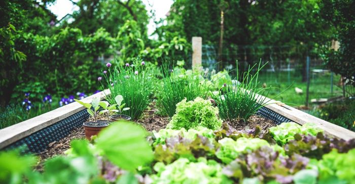 plants in a raised bed in a garden