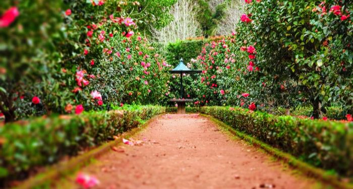 a dirt pathway between rows of plants leading to a table https://unsplash.com/photos/1_yycyoMT6g