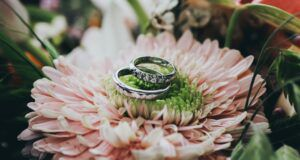 wedding rings on top of a pink flower