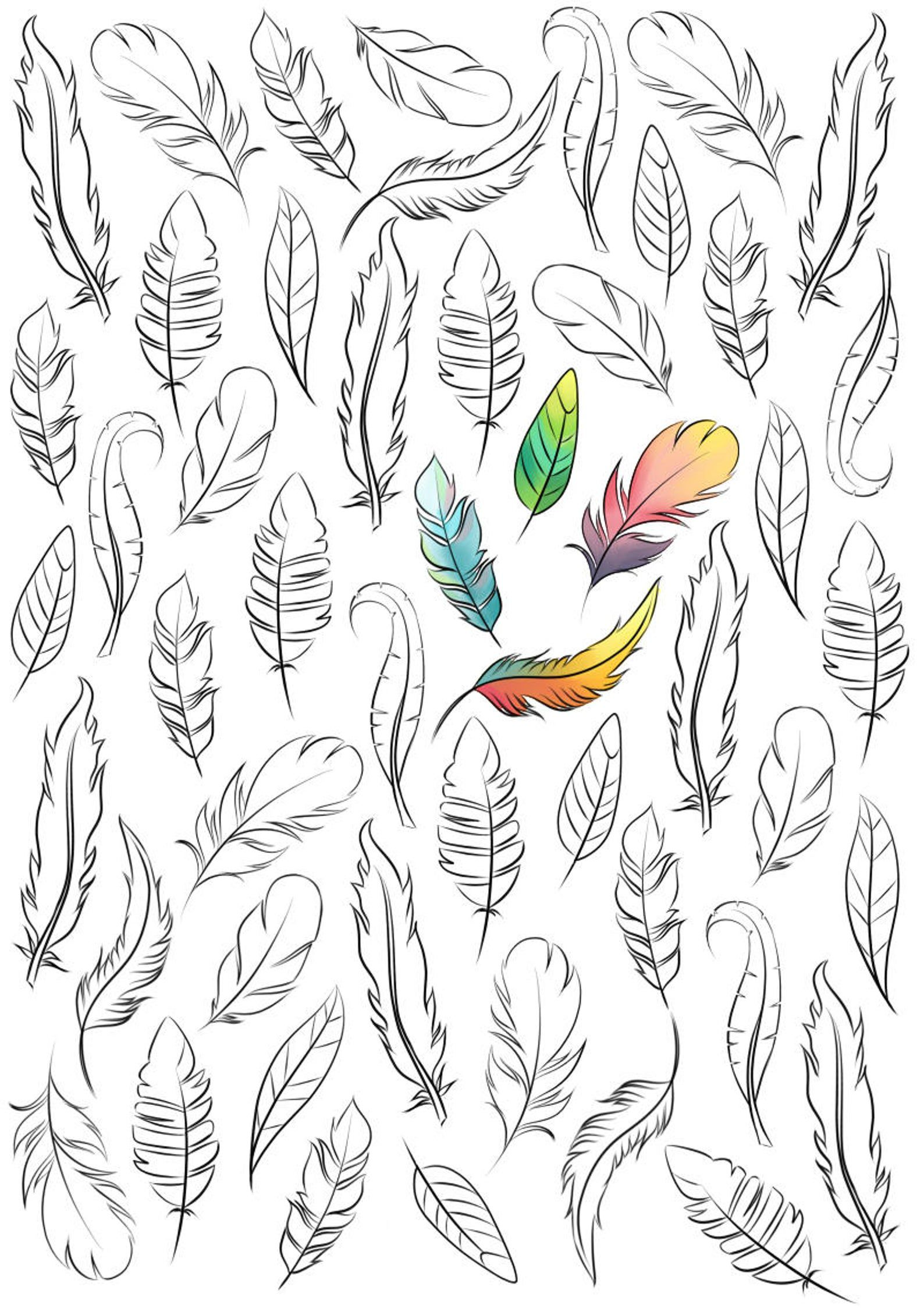 coloring book design of feathers