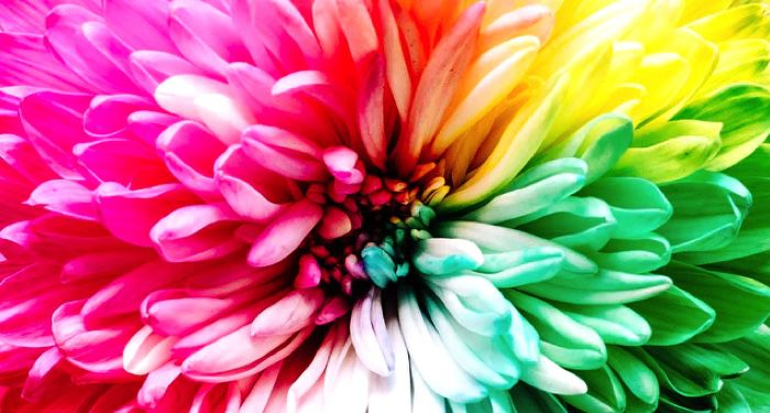 closeup photo of a flower with bright malt-colored petals https://unsplash.com/photos/iMdsjoiftZo