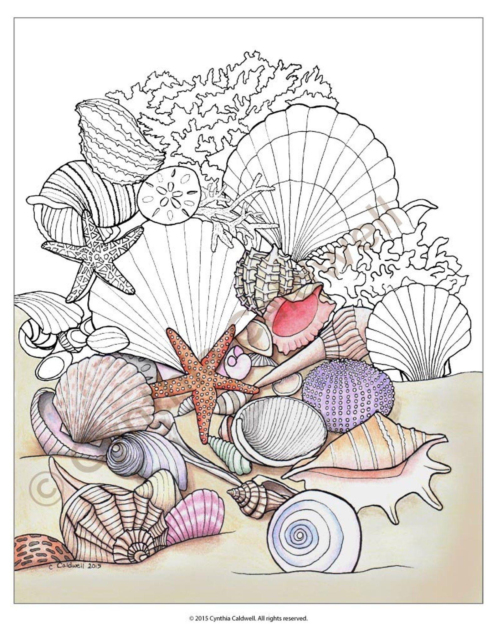 Seashells coloring book design