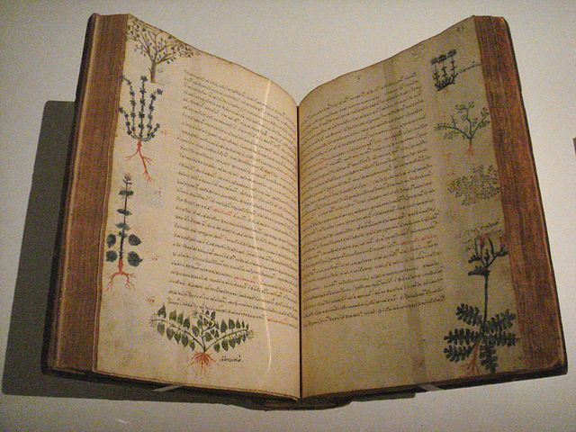 A 15th century Byzantine hand-illustrated edition of De Materia Medica. There are wide margins around the text and four different plants are depicted in the margins of each page.