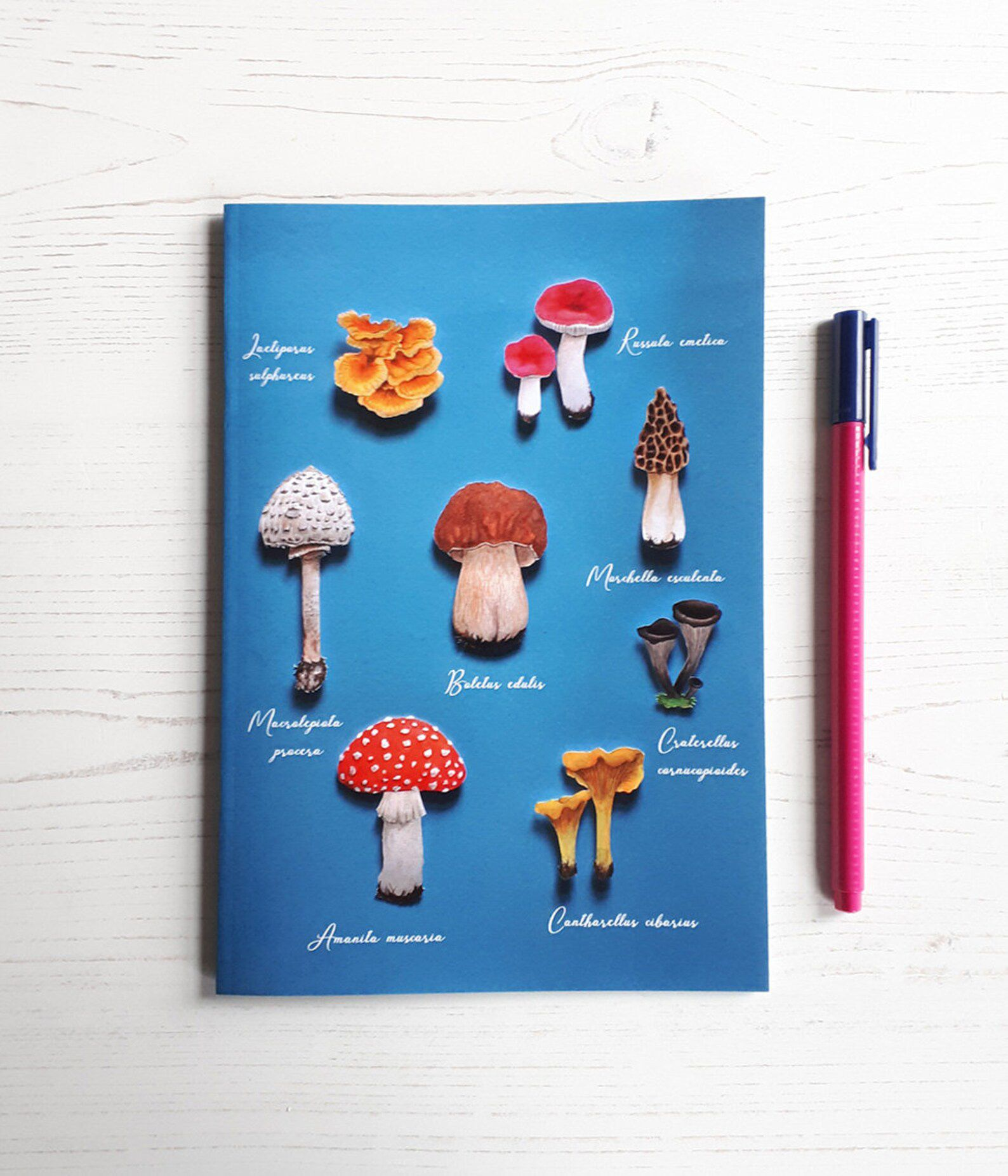 Bright blue notebook, with mushrooms on the front cover.