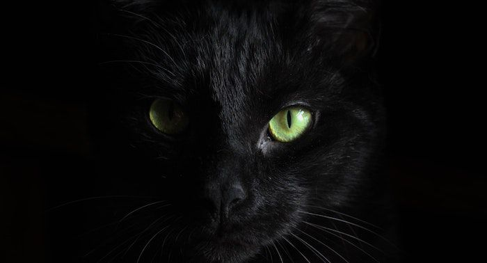 Close up image of a black cat face
