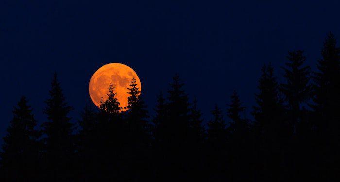 Image of big orange moon behind trees