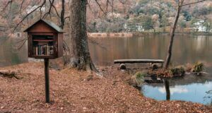 Image of a Little Free Library beside a pond in a wooded area