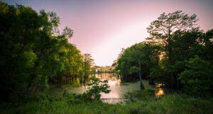 Image of a Mississippi bayou