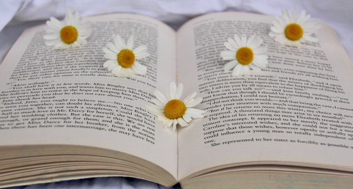Image of open book with daisies on top of the pages