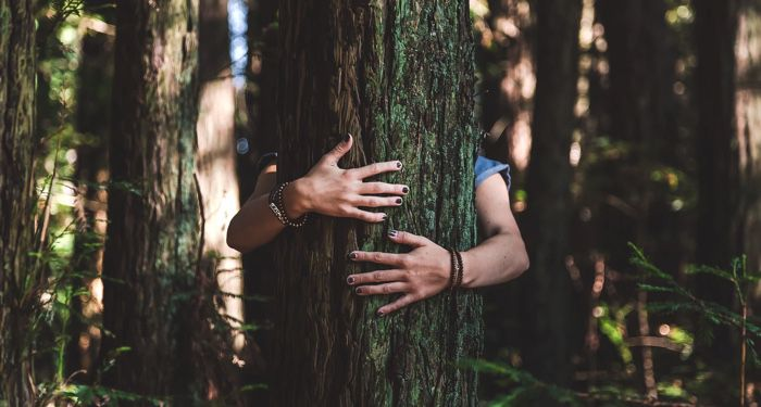 a tree being hugged by a person standing behind the tree.