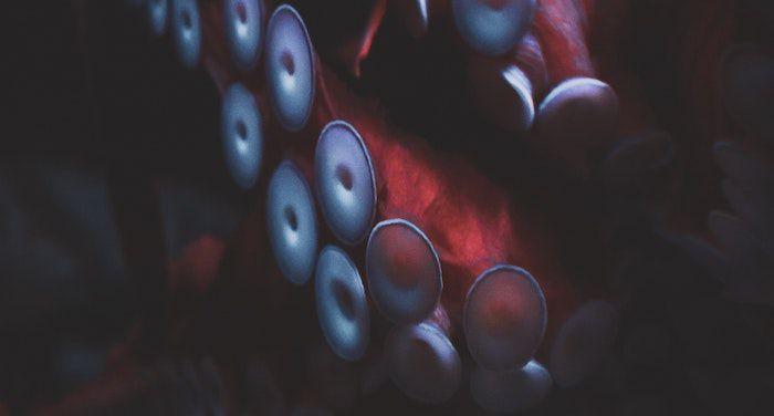 Close up image of an octopus