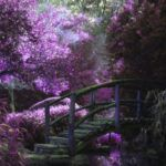 image of a purple garden