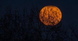 Image of a full orange moon